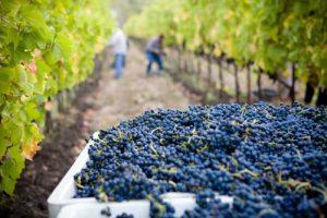 formation-viticole-anglais-bordeaux-vignes